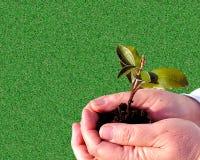 Fundo de jardinagem Imagens de Stock Royalty Free