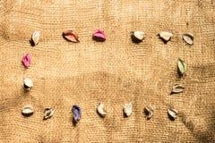 Fundo de lãs e folhas coloridas imagens de stock royalty free