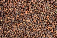 Fundo de lentilhas francesas secadas Fotos de Stock Royalty Free