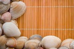 Fundo de madeira agradável com as conchas do mar coloridas Foto de Stock Royalty Free