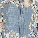 Fundo de madeira azul com conchas do mar e corais imagens de stock