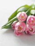 Fundo de madeira branco com as tulipas no canto direito superior Imagens de Stock Royalty Free
