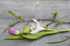 Fundo de madeira cinzento velho com espaço vazio branco roxo da cópia das tulipas, do snowdrop e do açafrão, decoros do verão da  Imagens de Stock