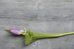 Fundo de madeira cinzento velho com espaço vazio branco roxo da cópia das tulipas, do snowdrop e do açafrão, decoros do verão da  Fotografia de Stock