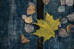 Fundo de madeira colorido das folhas de outono Fotografia de Stock Royalty Free