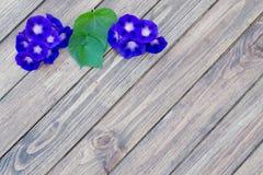 Fundo de madeira com flores Imagem de Stock Royalty Free