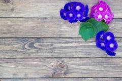 Fundo de madeira com flores Imagens de Stock Royalty Free