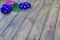 Fundo de madeira com flores Foto de Stock