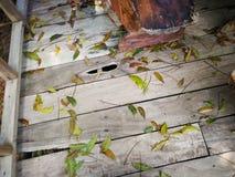 Fundo de madeira com folha verde Fotos de Stock