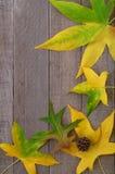 Fundo de madeira com folhas da queda para um cartão Imagem de Stock