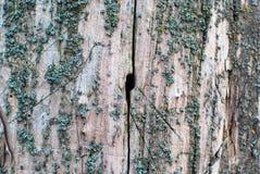 Fundo de madeira com furo nele Fotografia de Stock Royalty Free