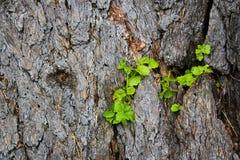 Fundo de madeira com plantas Fotos de Stock Royalty Free