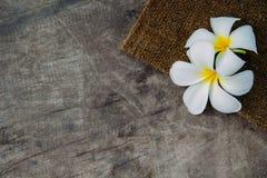Fundo de madeira com Plumeria Fotografia de Stock