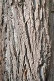 Fundo de madeira da casca Textura da casca de madeira em um tronco de ?rvore fotografia de stock