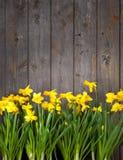Fundo de madeira da cerca das flores Imagens de Stock Royalty Free