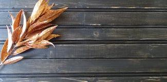 Fundo de madeira da decoração das folhas da queda ou de outono Fotos de Stock