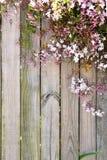 Fundo de madeira da flor Foto de Stock