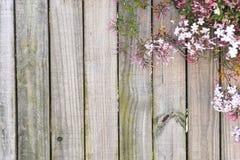 Fundo de madeira da flor Fotografia de Stock