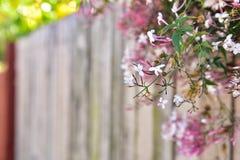 Fundo de madeira da flor Fotos de Stock Royalty Free