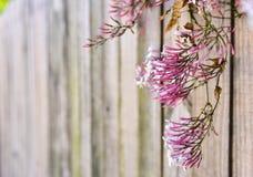 Fundo de madeira da flor Fotos de Stock