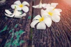 Fundo de madeira da flor obscura do plumeria Imagem de Stock Royalty Free