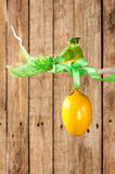Fundo de madeira da Páscoa ou da mola - pássaro e ovo em um galho Fotografia de Stock Royalty Free