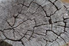 Fundo de madeira da textura do marrom da prancha o tuxture de madeira seca para como o fundo Foto de Stock