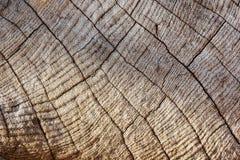 Fundo de madeira da textura, madeira da teca Imagem de Stock