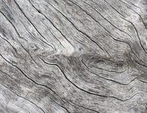 Fundo de madeira de prata Fim de madeira da textura acima da foto Árvore velha branca perto do mar fotografia de stock