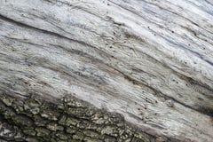 Fundo de madeira detalhado imagens de stock royalty free