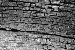 Fundo de madeira do grunge da textura, textura, papel de parede Imagem de Stock Royalty Free