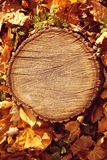 Fundo de madeira do marrom da floresta do outono Stu de madeira da floresta da textura Imagem de Stock Royalty Free