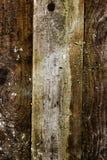 Fundo de madeira interessante da grão Imagens de Stock Royalty Free