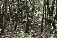Fundo de madeira italiano - Fiastra Fotos de Stock