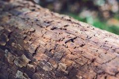 Fundo de madeira muito velho Foto de Stock