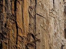 Fundo de madeira natural bonito Tronco de árvore seco Textura de madeira fotos de stock royalty free