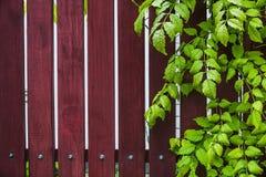 Fundo de madeira natural com folhas verdes imagens de stock royalty free