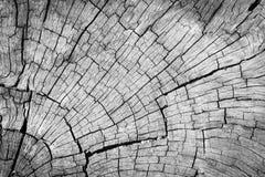 Fundo de madeira rachado cinzento velho da textura Fotografia de Stock