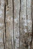 Fundo de madeira rachado da textura da grão Imagens de Stock Royalty Free