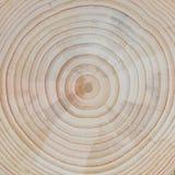 Fundo de madeira: Seção transversal do pinheiro Imagens de Stock