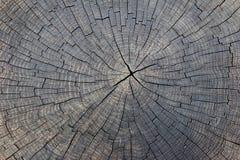 Fundo de madeira de seção transversal rachado velho do tronco de árvore Imagem de Stock Royalty Free