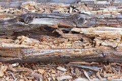 Fundo de madeira, textura de logs caídos velhos Imagens de Stock Royalty Free