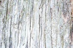 Fundo de madeira textured rachado áspero obsoleto resistido Fotos de Stock Royalty Free