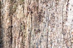 Fundo de madeira textured rachado áspero obsoleto resistido Imagens de Stock Royalty Free