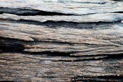 Fundo de madeira velho da textura da árvore Foto de Stock