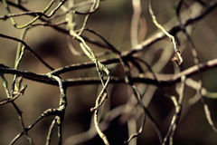 Fundo de madeira velho da textura do ramo de árvore Foto retro do vintage com uso de filtros de cor Fotografia de Stock Royalty Free