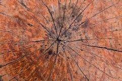 Fundo de madeira velho da textura dos anéis de árvore, anel anual de seção transversal fotografia de stock royalty free