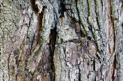 Fundo de madeira velho da textura da ?rvore imagem de stock royalty free