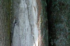 Fundo de madeira velho da textura da ?rvore imagens de stock