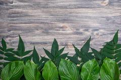 Fundo de madeira velho escuro com as folhas frescas bonitas arranjadas em seguido Modelo do vintage Vista superior Imagem de Stock Royalty Free